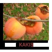 Kakis