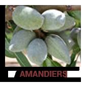 Amandiers
