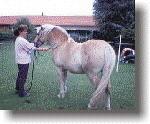 Elektrotherapie beim Pferd