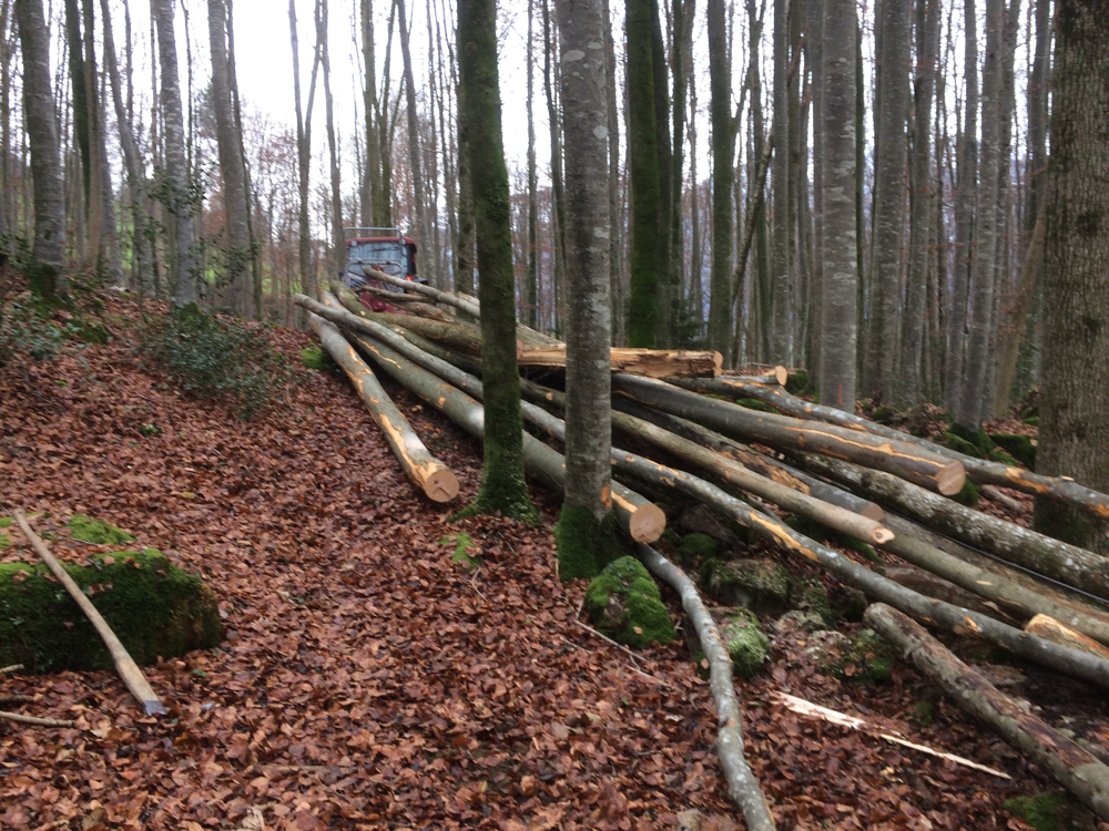 Stämme durch Forstgruppe gefällt