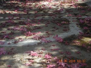 Nuage rouge au sol