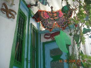 Collection de papillon unique