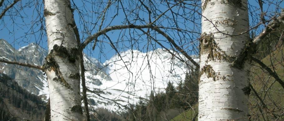 Blick vom Balkon der Appartments Kaser - Urlaub in einer Ferienwohnung in Südtirol