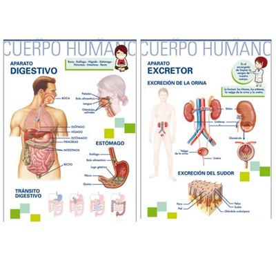 APARATO DIGESTIVO/APARATO EXCRETOR(PRIMARIA) - MRC Distribuciones ...