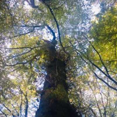 La nature omniprésente à Epinal