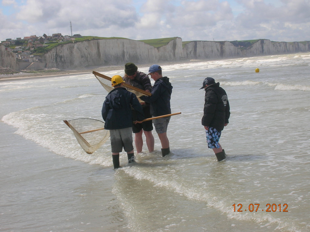 observation de la faune marine
