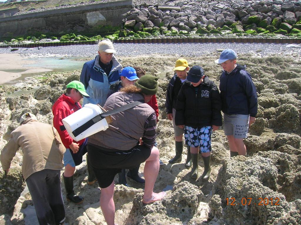 découverte et observation de la faune de l'estran rocheux