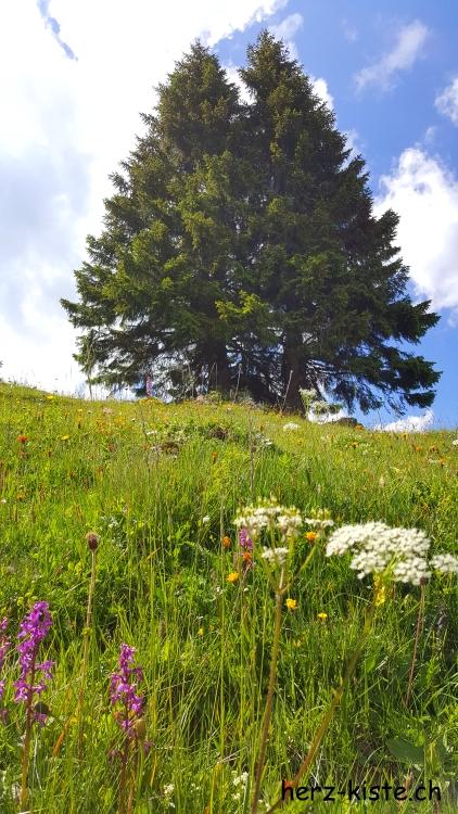 Blumenwiese mit Baum am Seebergsee