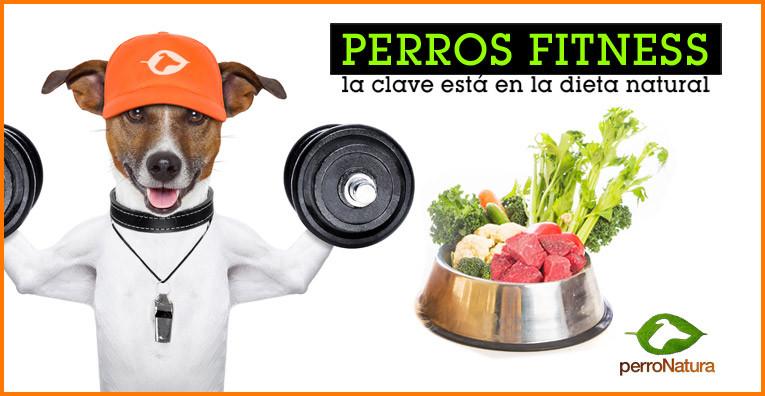 perros dieta natural