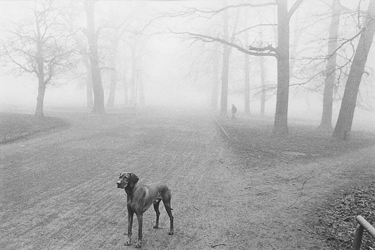 Hund im Park | analoges Foto / Handabzug S/W | 1999 | Halle