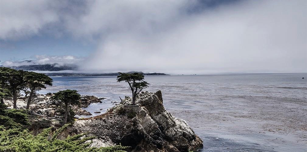 Carmel Lone Cypres - 2012, 180x90cm, fineArt print auf GlossArtFibre, kaschiert auf 4mm AluDiBond, Schattenfugenrahmen Nussbaum massiv