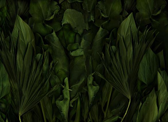Antonius - Magic Garden- Jungle-Darkgreen, 120x80cm
