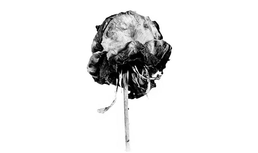 Rose, Fiber-Based-Fine Art Print, 42x57 cm , 2010