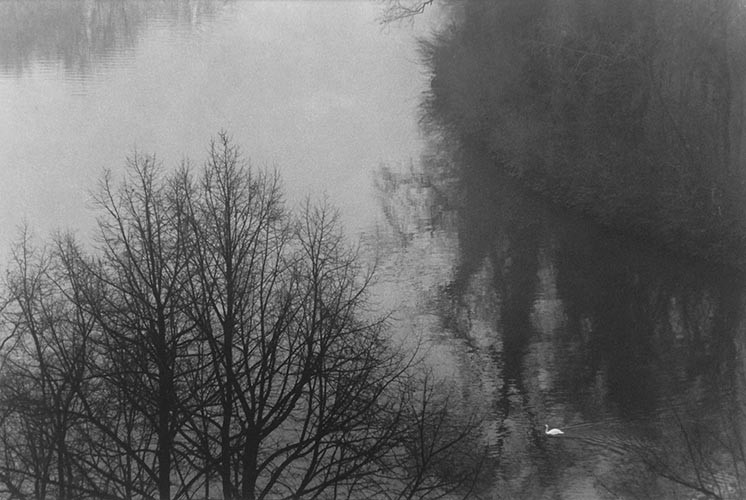 Schwan, Fluss, Baum | analoges Foto / Handabzug S/W | 2007 | Halle