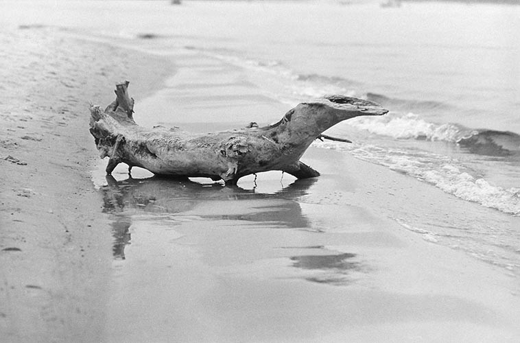 Krokodil aus Holz | analoges Foto / Handabzug S/W | 1973 | Dnjepropjetrowsk