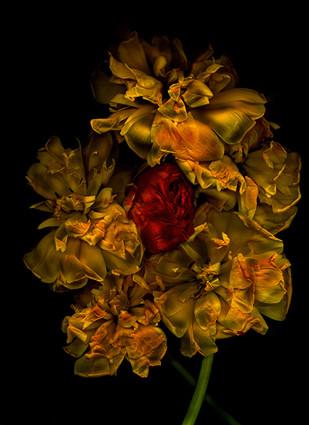 Antonius -  Art Floral 2, 100x75cm