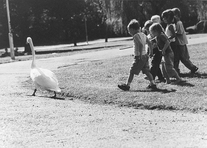 Schwan und Kinder | analoges Foto / Handabzug S/W | 1998 | Halle