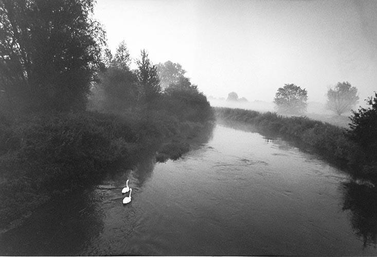 2 Schwäne auf Fluss | analoges Foto / Handabzug S/W | 2000 | Halle