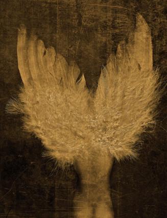 Antonius - Angel, 120x80cm
