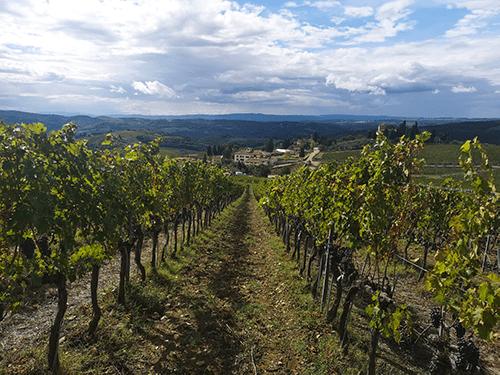 Wijngaard Tenuta Casenuove Chianti streek