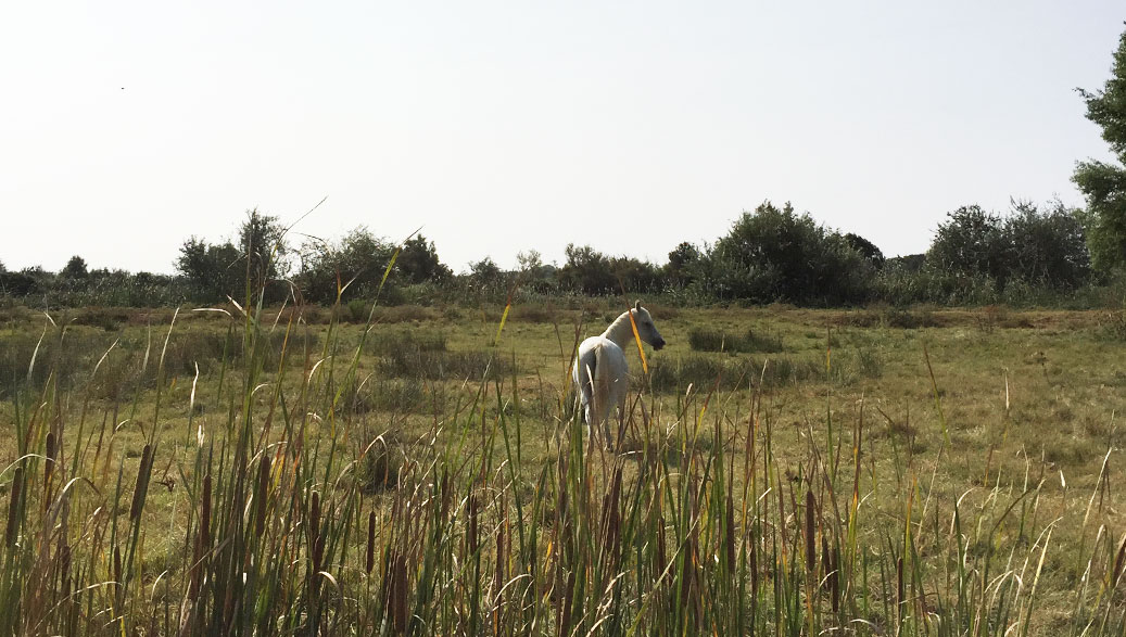 Into the Wild in Camargue with Laurent Manade