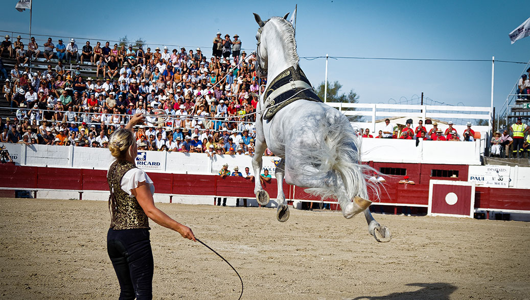 Equestrian spectacular with Hasta Luego