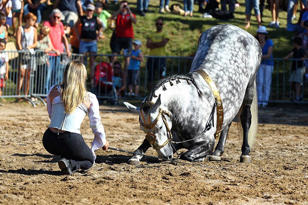 Horseback Experiences
