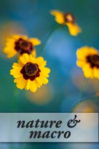 nature macro photographer frederick maryland fine art