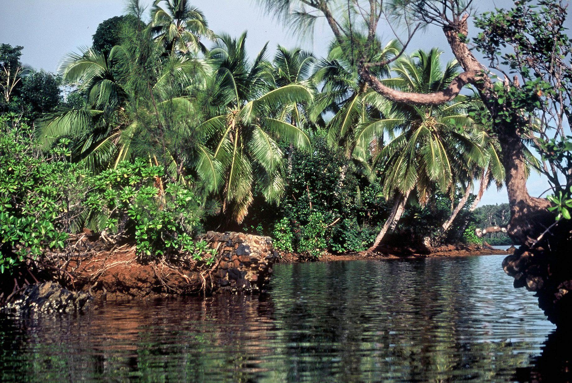 Dans la mangrove de Ste-Marie, en allant vers le refuge des pirates