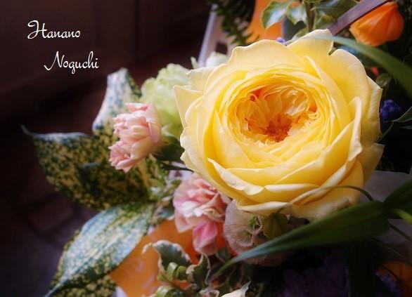 花びらが幾重にもなるカタリナ
