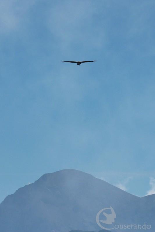 Oiseaux des cimes - Doriane GAUTIER, Couserando - Ariège Pyrénées