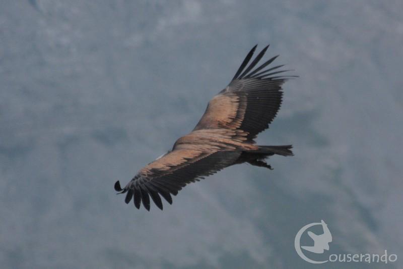 Stage d'initiation à l'ornithologie montagnarde