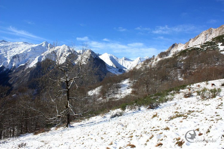 Montagnes enneigées du Couserans - Doriane GAUTIER, Couserando - Randonnée Nature Ariège Pyrénées