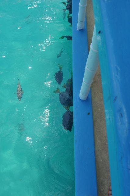 Fische am Boot geben eine Idee von der Farbenpracht, die unter Wasser wartet