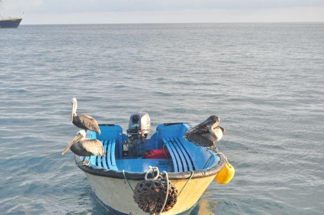 Pelikane sind echt sooooowas von relaxte Viecher!