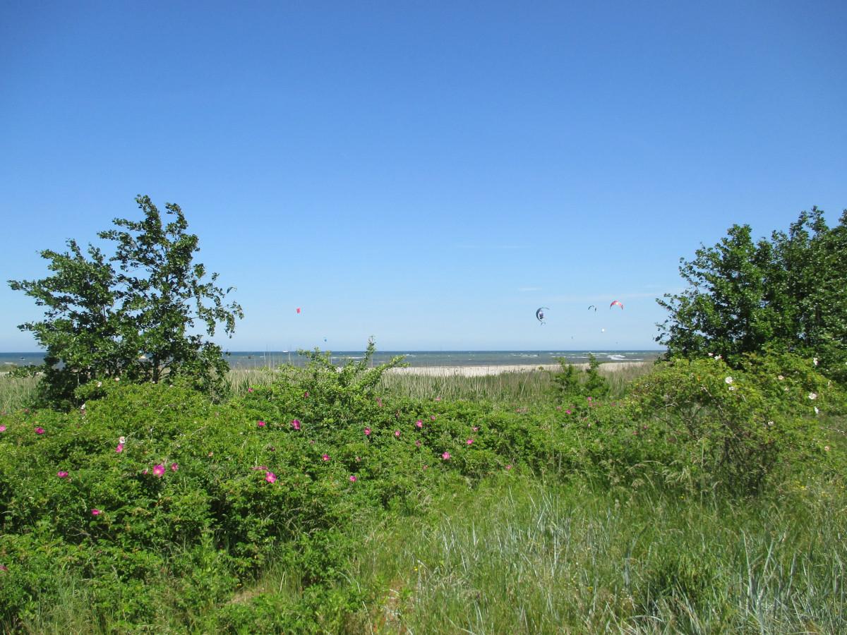 Kiter bei Laboe