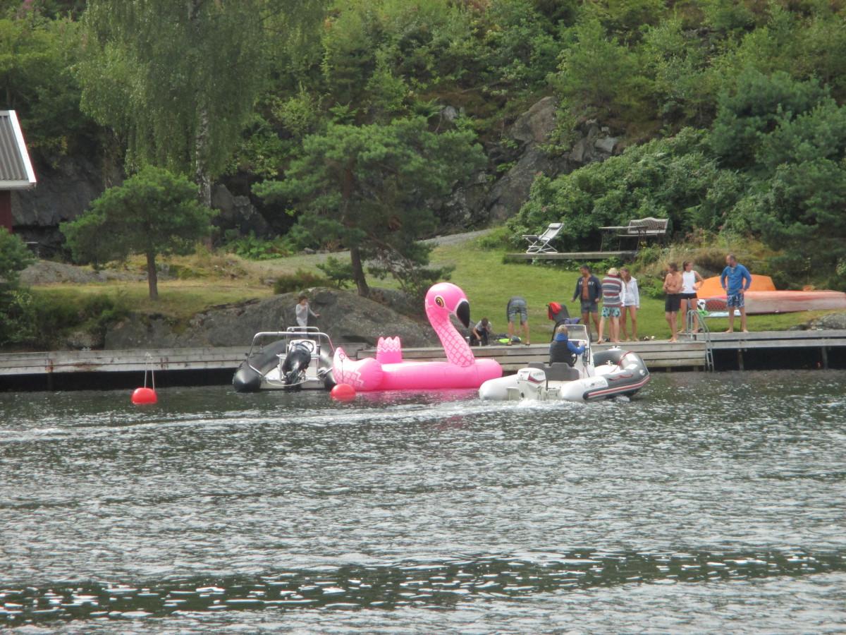 Manni's Traum: ein pinkfarbener Bade-Flamingo...