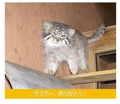 出典:こども自然動物公園HP