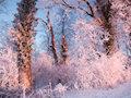 Wintermorgen im Lipperland