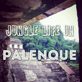 Jungle life in Palenque