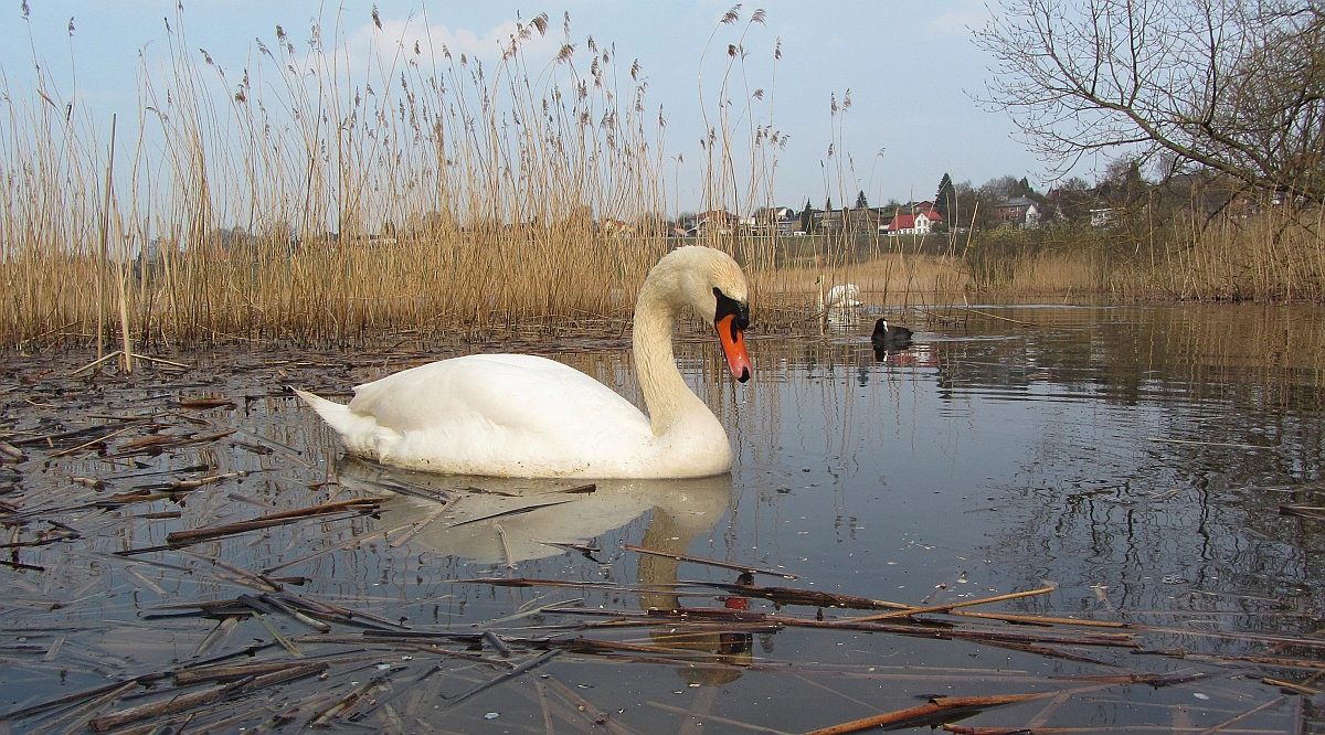 Am See in Dänemark.