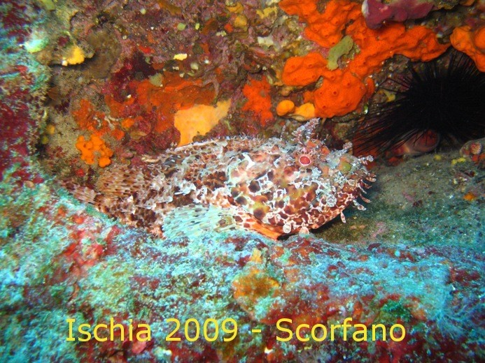 IC8/IZ0KRC - Underwater photo during holiday in Ischia '09
