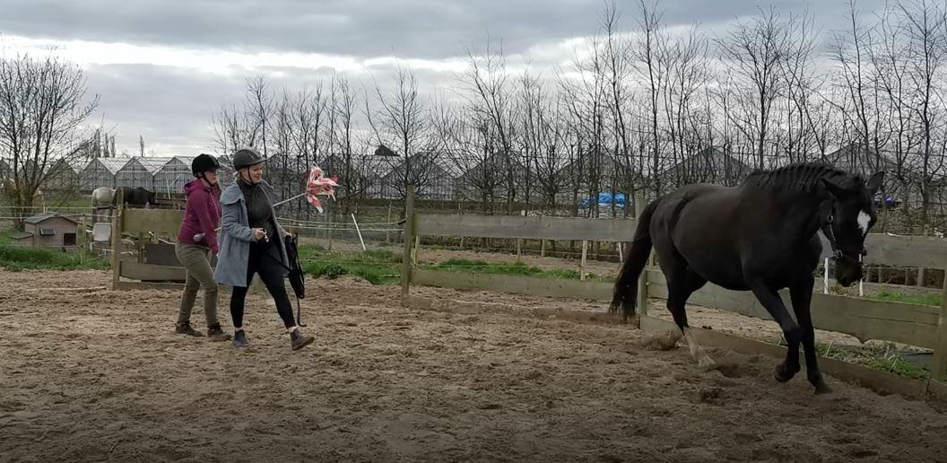 loswerken les met Whynni (dominant paard even voorwaarts maken)