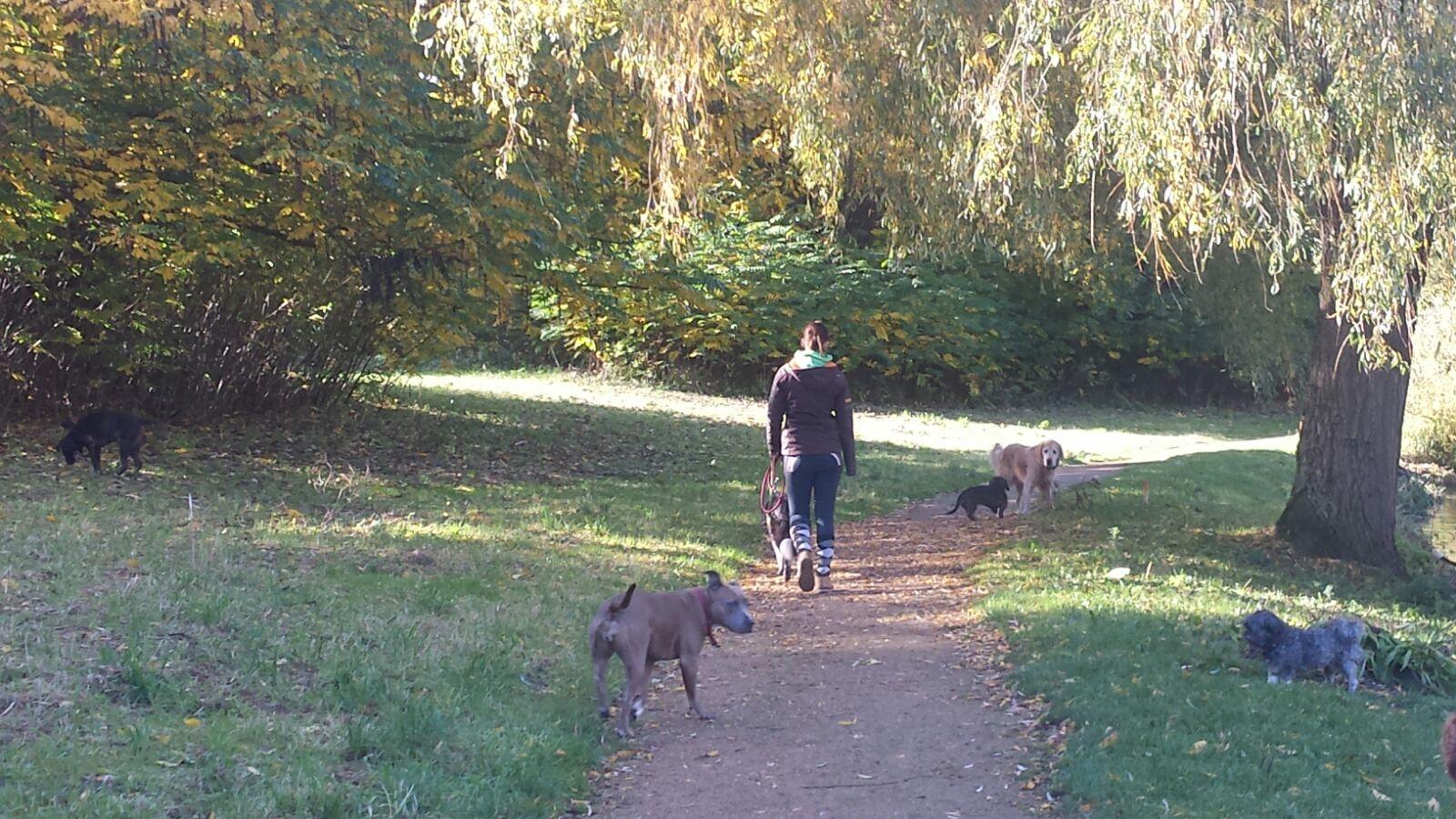 Met HUS Voetjes van de Vloer wandelen. De hondjes letten ondertussen ook op mij.