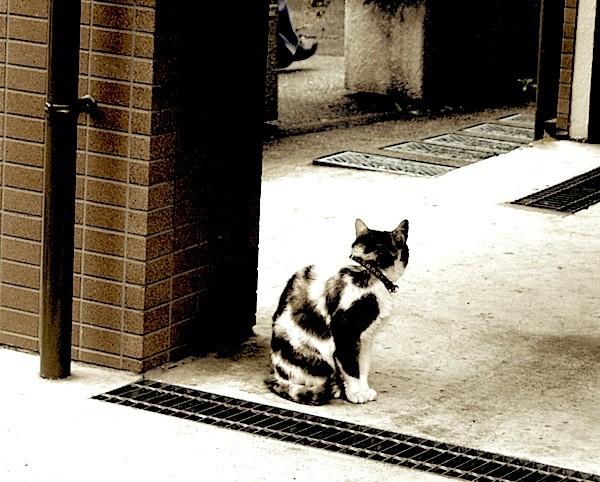そこにもここにもネコ。走って逃げるような輩はおりません「あんだよう?」てな顔で見上げてきますな