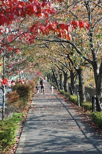 近所の川沿い散歩道