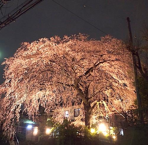 個人宅通り抜けライトアップしだれ桜