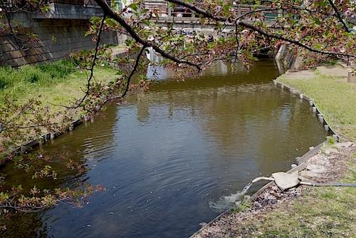 小公園の池に川から揚水注水中。活力アップの輸液である