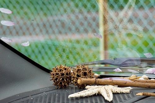 ダッシュボードのモミジバフウ