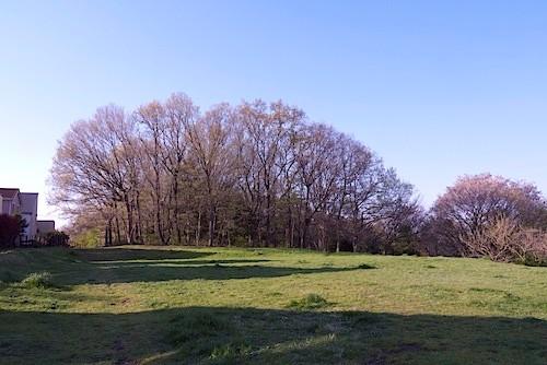 近くの尾根緑地